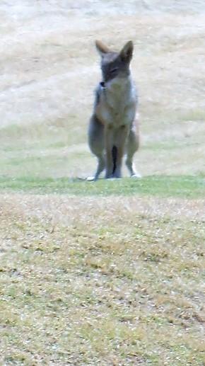golfday 9